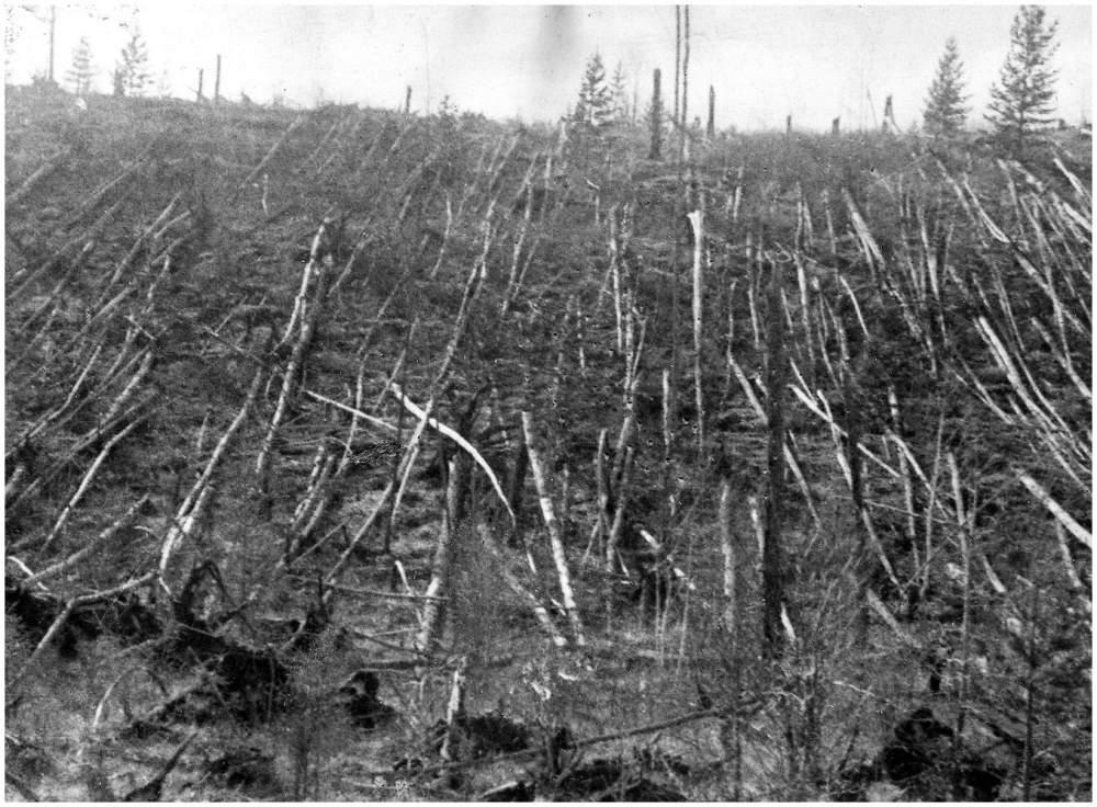 Evento di Tunguska_alberi_abbattuti
